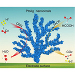 1-Naphthol induced Pt<sub>3</sub>Ag nanocorals as bifunctional cathode and anode catalysts of direct formic acid fuel cells